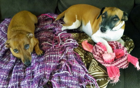 Sad dogs on couch