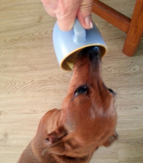 Dog licking cup.