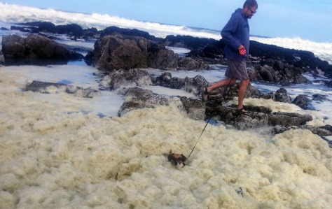 Dog swimming in sea foam
