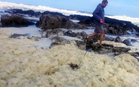 Dog swimming in sea foam
