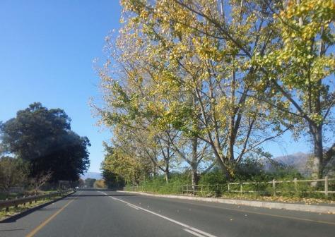 Road to Franschhoek