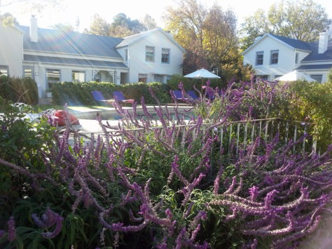 Lavender at LQF