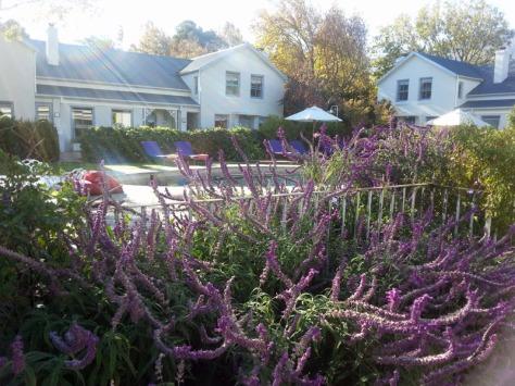 Lavender at LQF