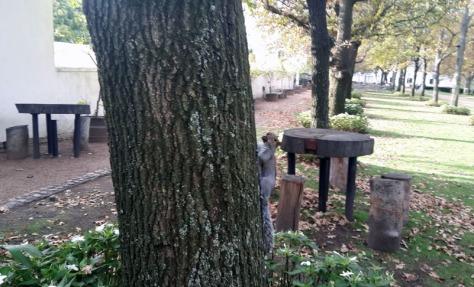 Boschendal squirrel