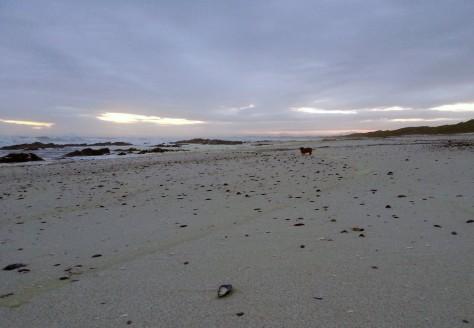 Mini dachshund on beach