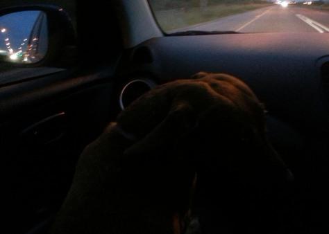 Dog in car at night