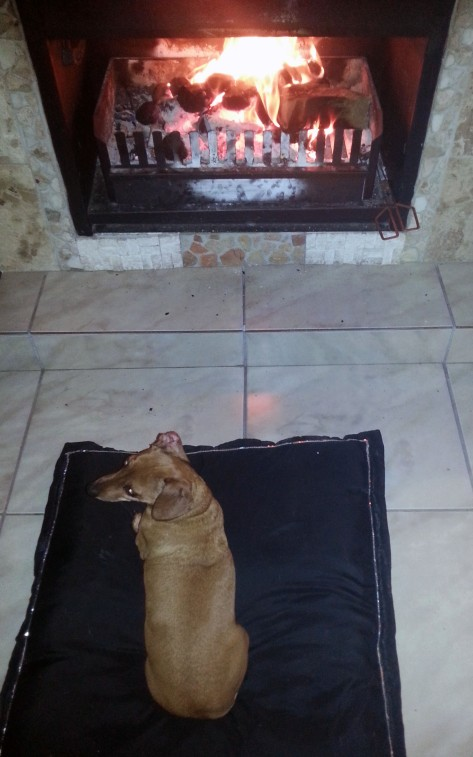 Small dog by fire in winter