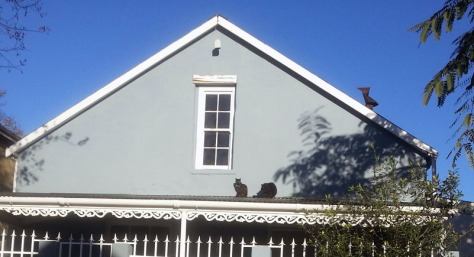 Cats on roof in Wellington