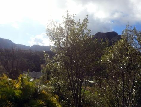 Constantia scenery