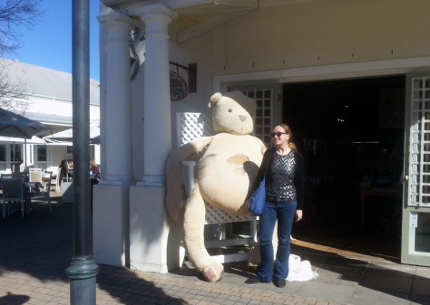 Teddy in Franschhoek