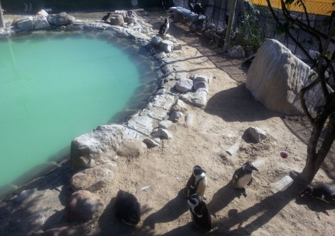 Penguins at SANCCOB.