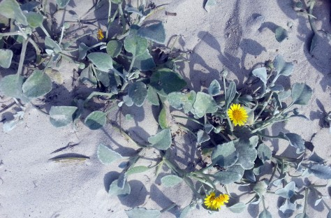 Yellow flowers and grey sand at beach