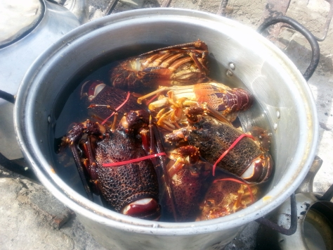 Lobsters at Die Strandloper
