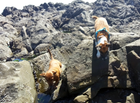 Dogs on rocks