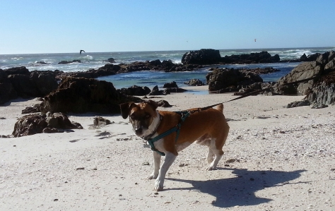 Dog at beach.