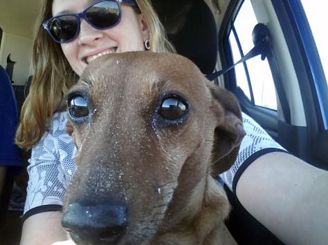 Sandy-nosed dog