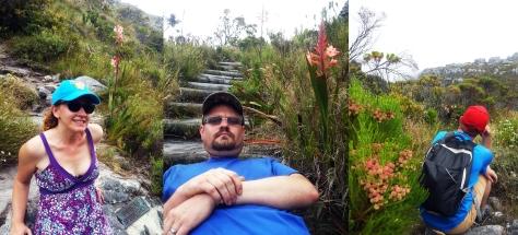 Flowers on Table Mountain's skeleton gorge.
