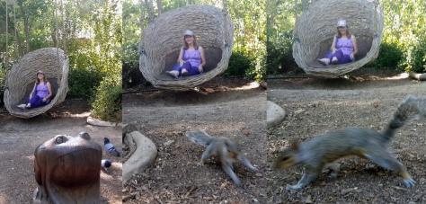 Squirrel in Company's Garden
