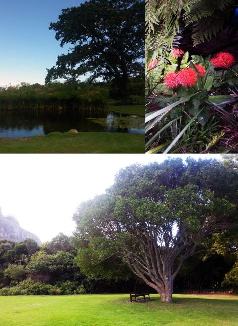 Tree in Kirstenbosch