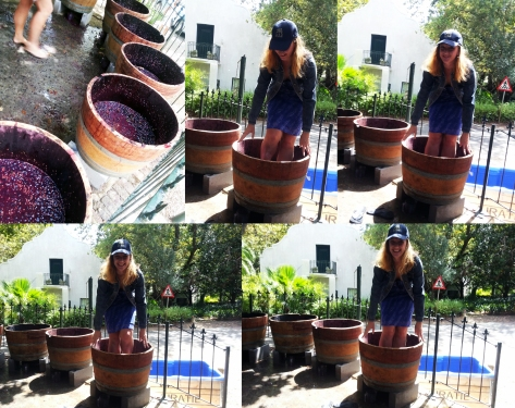 Stomping grapes at Muratie