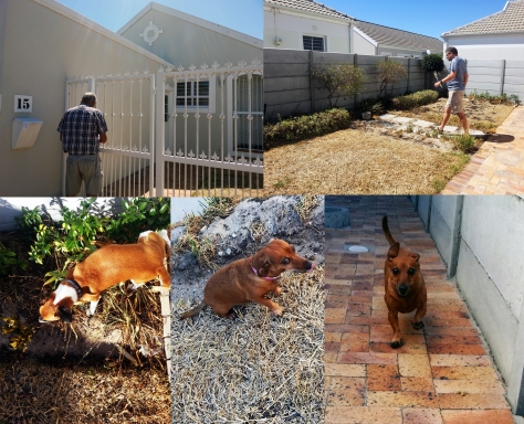 Gardening in Cape Town