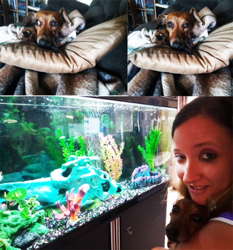 Fishtank dog