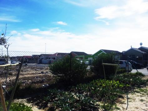 Veggie garden in Khayelitsha