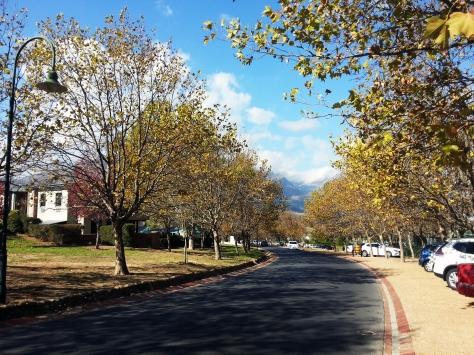 Stellenbosch tree streets