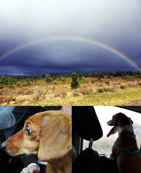 Rainbow and sandy dogs