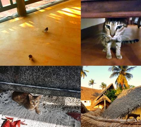 Cats in Zanzibar