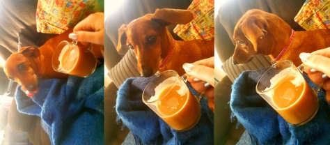 Dog with coffee