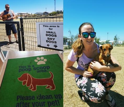 Leadville dog park.
