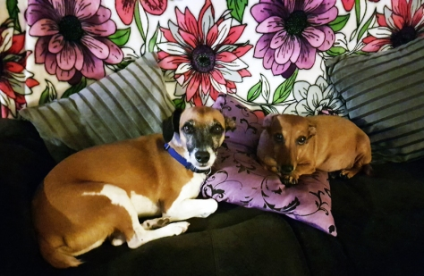Dogs on couch