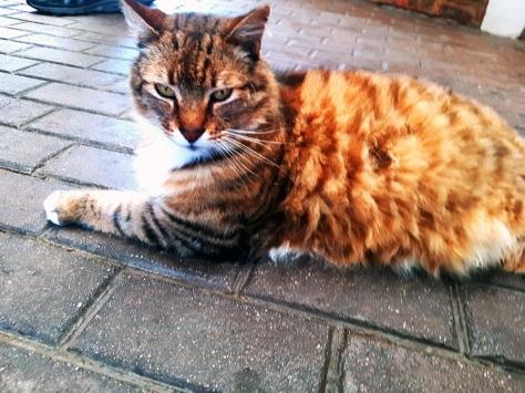 McPherson's cat