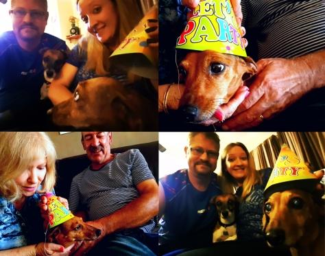 Dog in birthday hat.