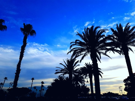 Palm trees outside GrandWest Casino