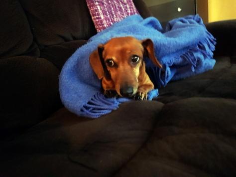 Suspicious dog.