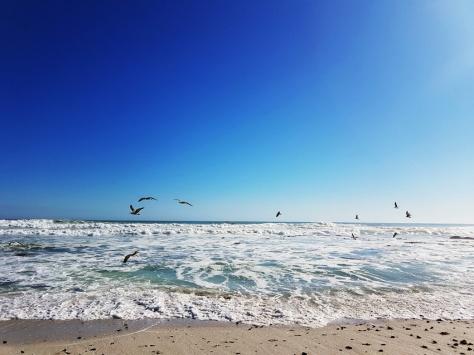 Sea birds above ocean