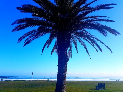 Palm tree in Melkbosstrand