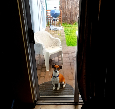 Dog waiting to be let inside.