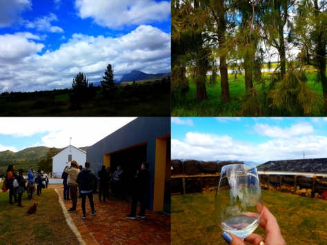 Ayama Wines at Slent Farm