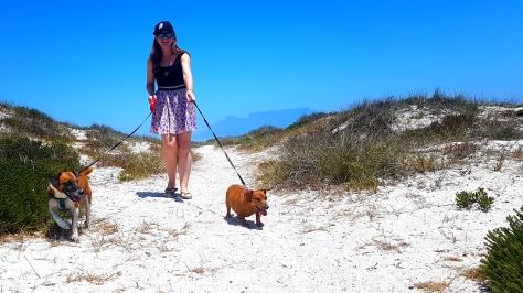 Dog walk at beach