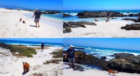 Dog beach walk