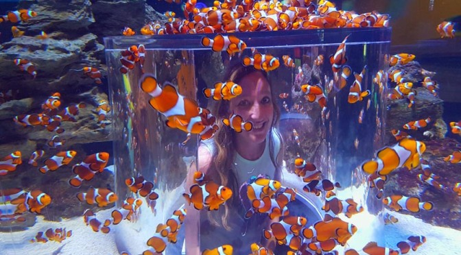 Finding Nemo (and other fishies) at the Two Oceans Aquarium