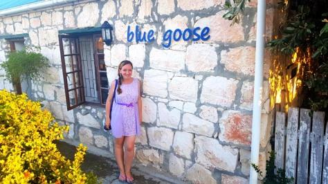 Blue Goose in Gansbaai