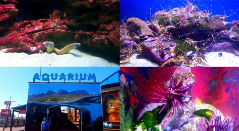 Aquarium at the V&A Waterfront