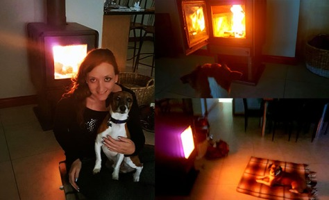It was cold enough that evening for us to put our new fireplace to use for the first time. Bassie enjoyed it but Bertie LOVED it. See various phases of his evening enjoyment here.