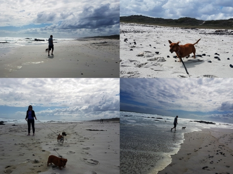 More beach walkies at Kreeftebaai.