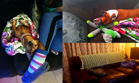 The doglets relaxing in the lounge at various stages of the week. They know this is home!