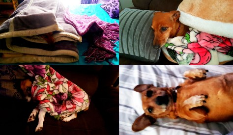 Various sleepy doglets, snapped trying to stay warm throughout the week.